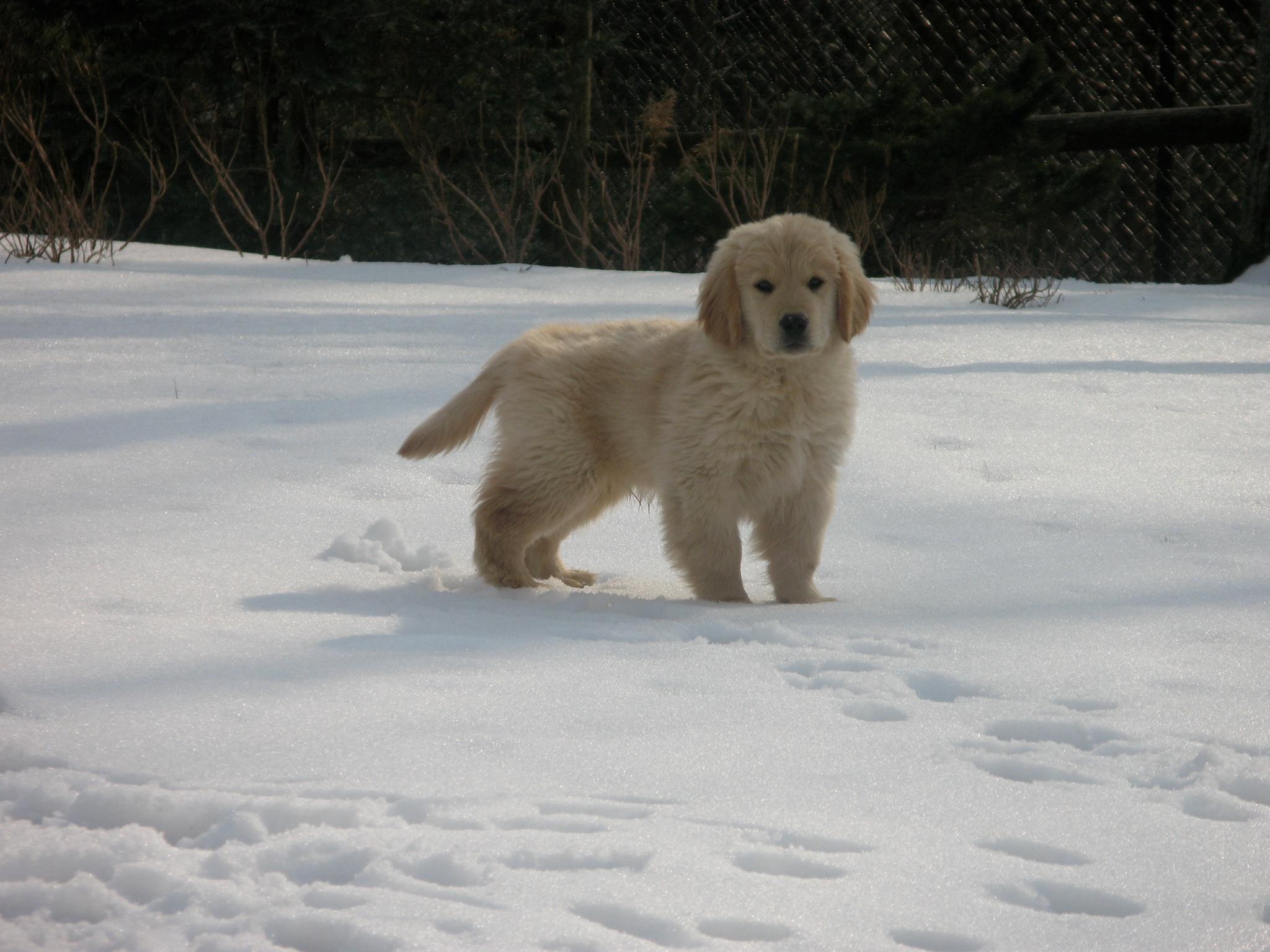robert-puppy